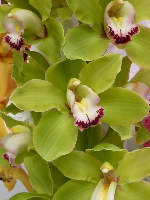 Orchid green flower, nature landscapes.