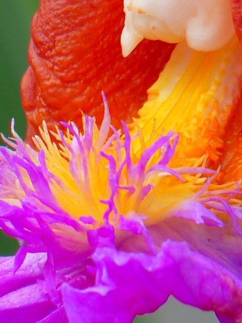 Orchid machu picchu flowers, nature landscapes.
