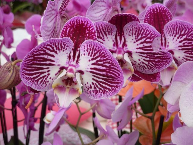 Orchid purple white, nature landscapes.
