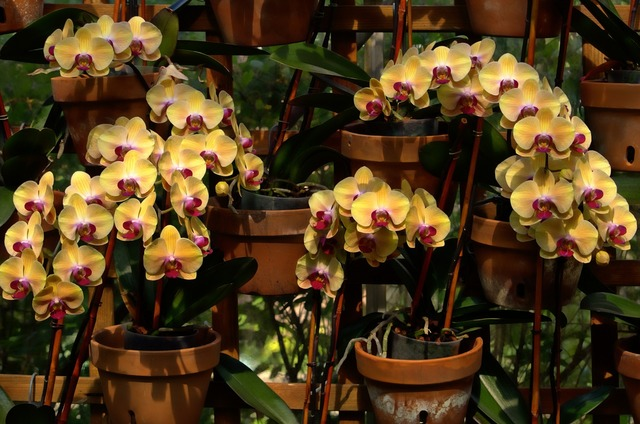 Orchids blooms flowers.