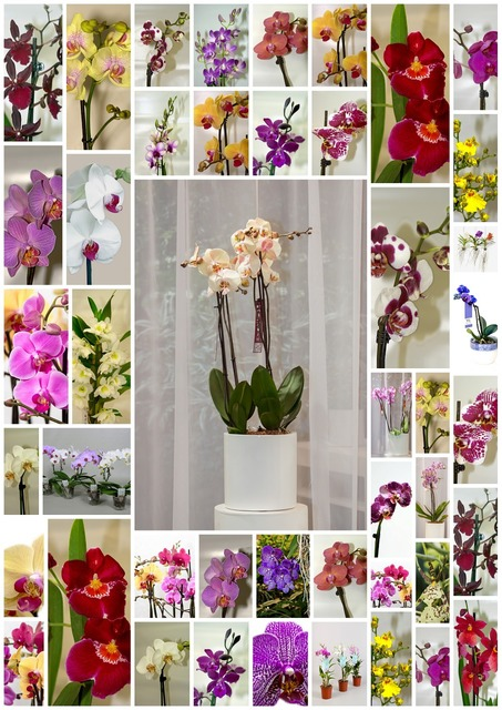Orchids flowers poster, nature landscapes.