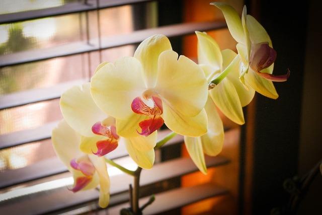 Orchids green best, nature landscapes.