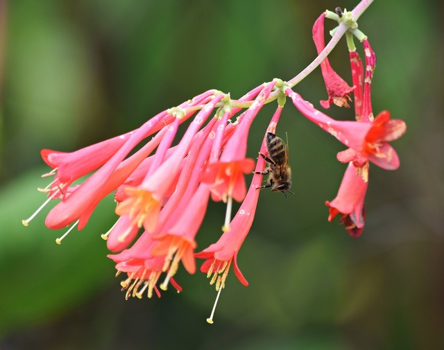 Osa flower bee, nature landscapes.