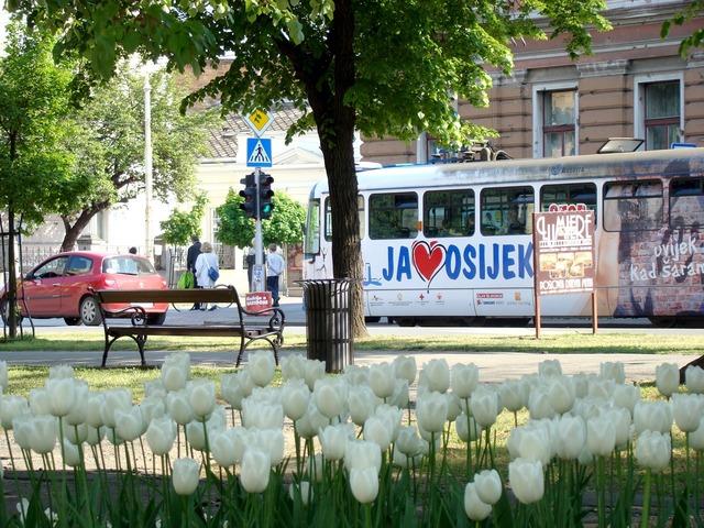 Osijek croatia tram, architecture buildings.