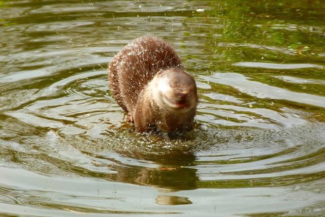 Otter wildlife park zoo, animals.