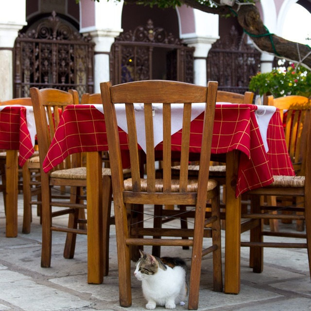 Outdoor seating cat greece, animals.