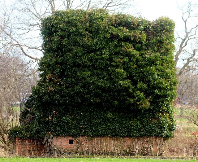 Overgrown turfed building, architecture buildings.