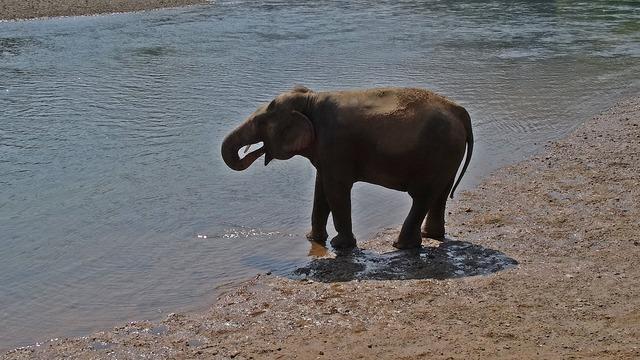 Pachyderm elephant national park.