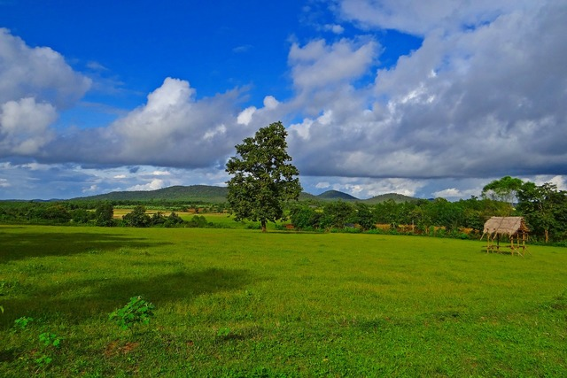 Paddy cultivation stratocumulus-clouds hubli-sirsi road.