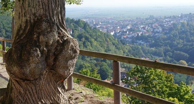 Palatinate palatinate forest walk.