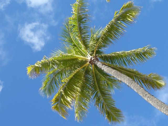 Palm hawaii beach, travel vacation.