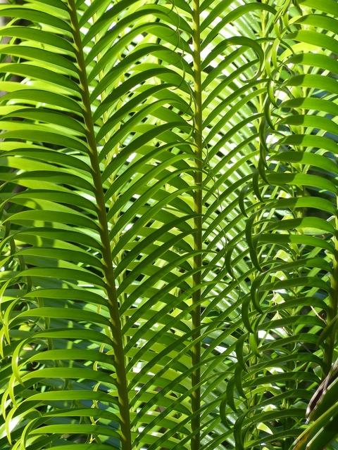 Palm leaves plant palm tree, nature landscapes.