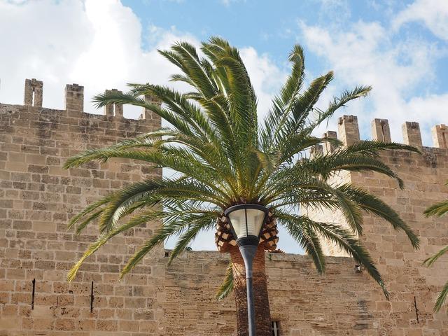 Palm palm fronds city gate.