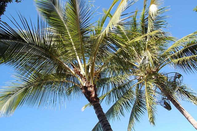 Palm trees summer australia.