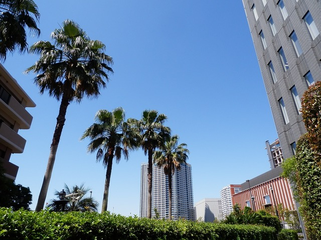 Palm trees tokyo summer.