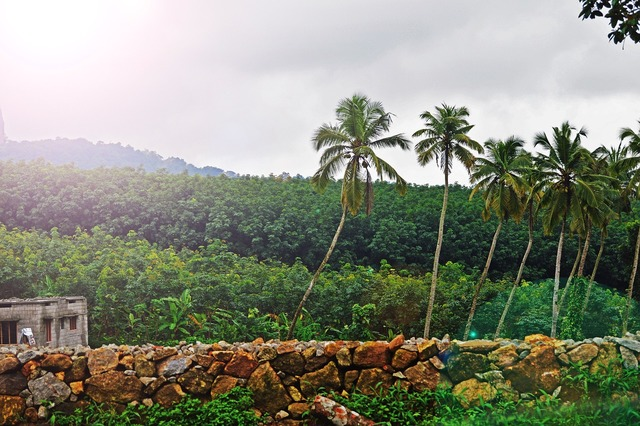 Palm trees wall jungle, nature landscapes.