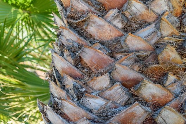 Palm tribe plant, nature landscapes.