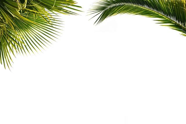 Palm wallpaper paper, backgrounds textures.