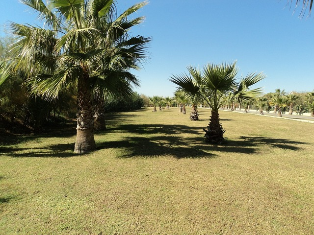 Palmenhein palm trees turkey, nature landscapes.