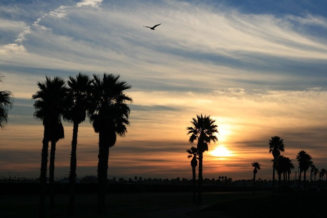 Palms tropica sunrise, animals.