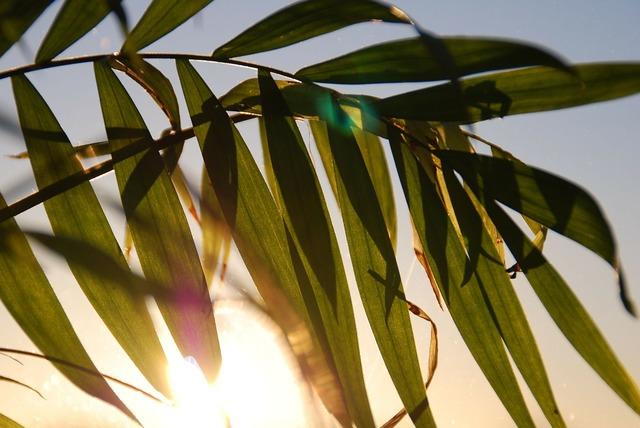 Palmtree sun plant, nature landscapes.
