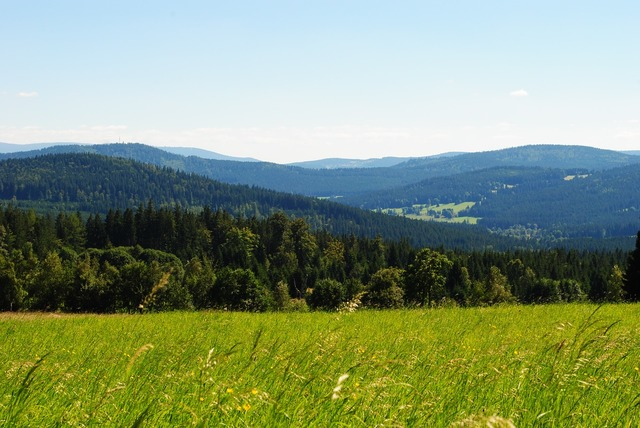 Panorama view green.