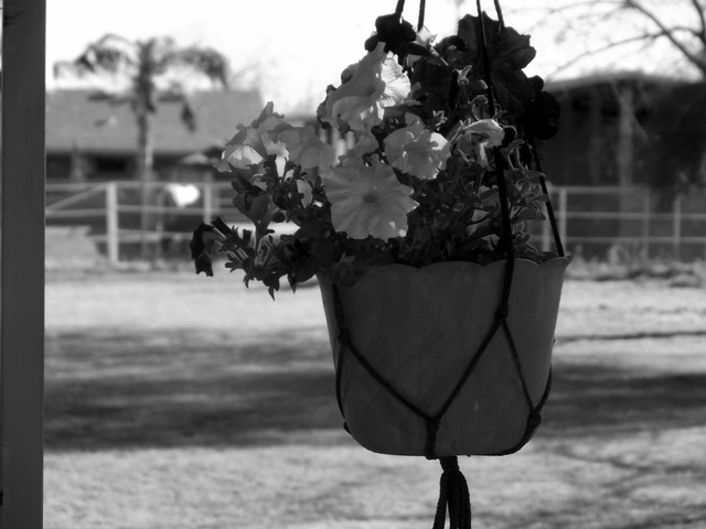 Pansy hanging flower pot outside, architecture buildings.
