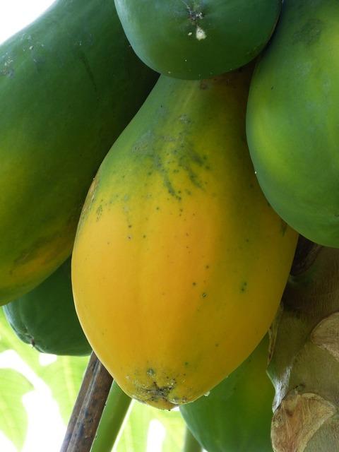 Papaya tropical south america, food drink.