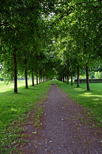 Park avenue walk.