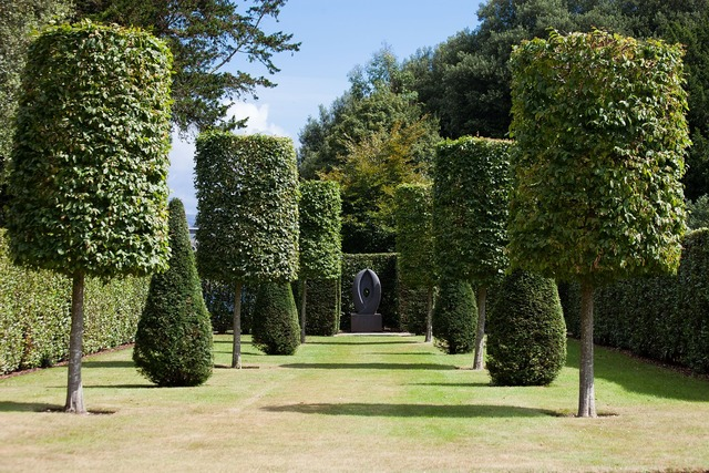 Park hedge garden, nature landscapes.