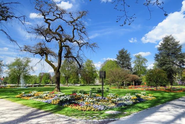 Park meadow flowers.