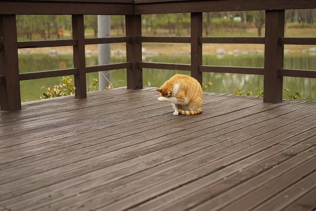 Park overcast cat, animals.