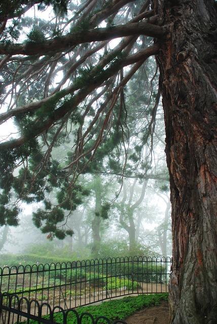 Park sequoia massandra park.