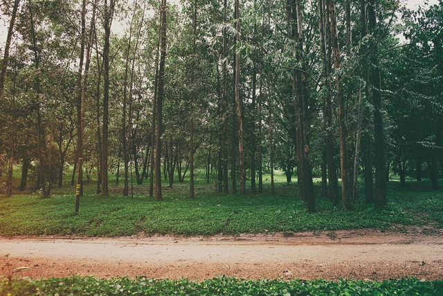Park trees grass.