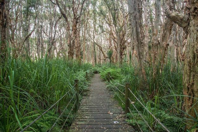 Park trees path.