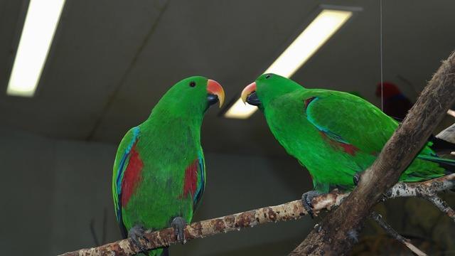 Parrot birds green.