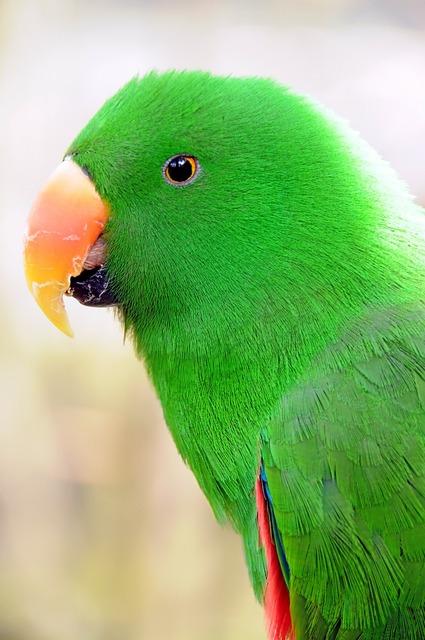 Parrot birds parakeet.