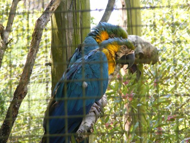 Parrots encaged zoo.