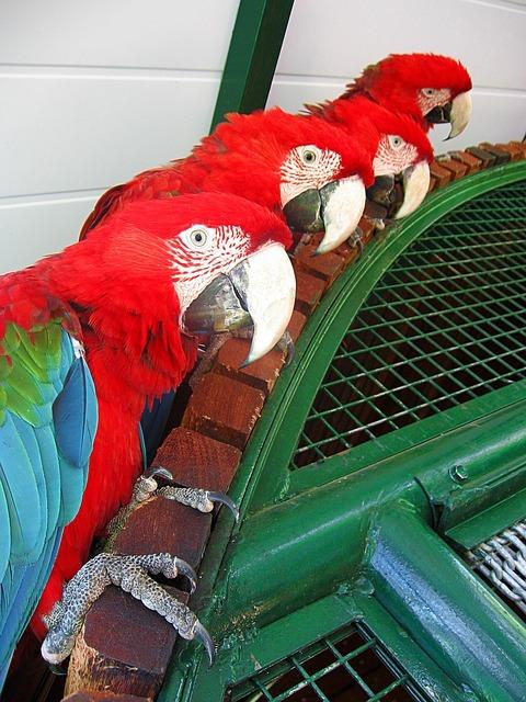 Parrots looks colorful, nature landscapes.