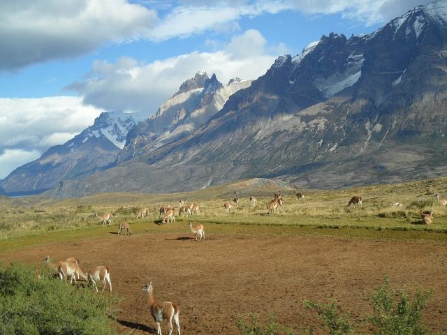 Patagonia alpacas mountains.