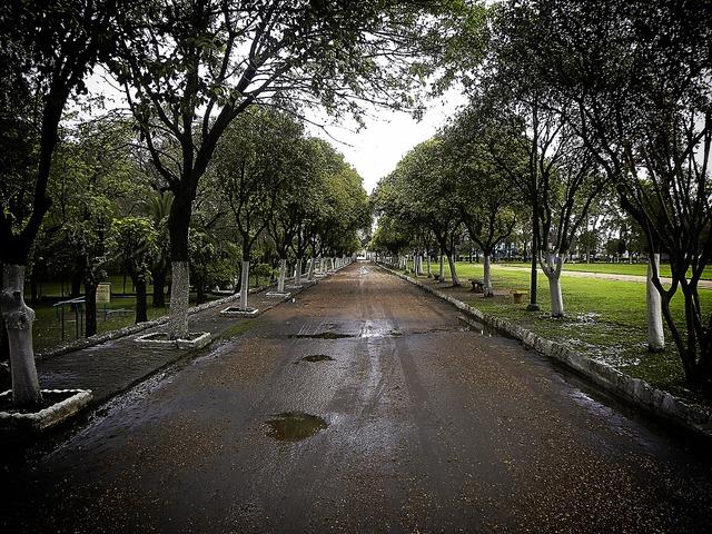 Path peace rainy.