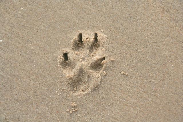 Paw print sand dog paw, animals.