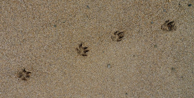 Paw prints paw prints, animals.