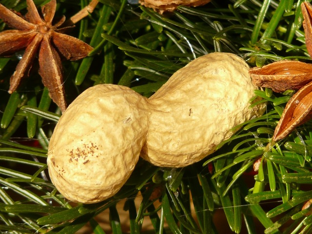 Peanut nut decoration.