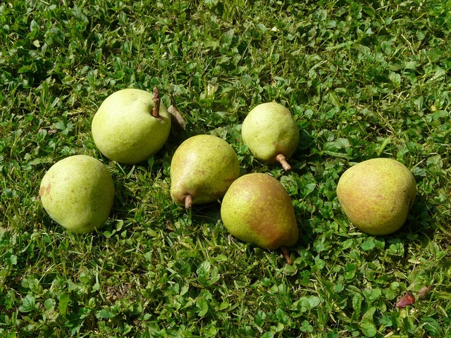 Pears meadow harvest, food drink.