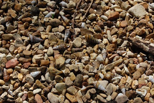 Pebbles shells shore, travel vacation.