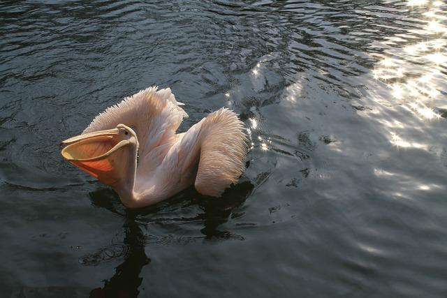 Pelican zoo liberec.