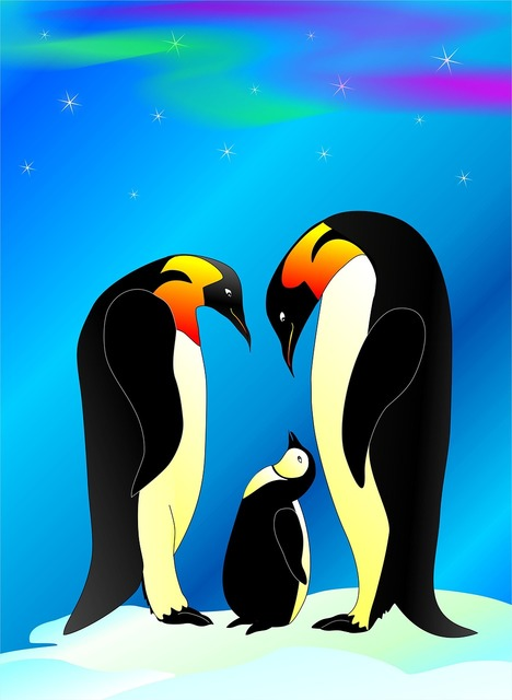 Penguin water bird animal, animals.