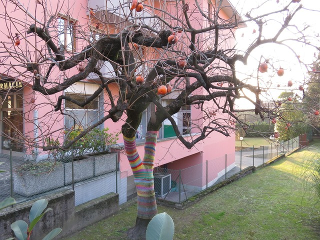 Persimmon tree tree with stocking decorated tree.