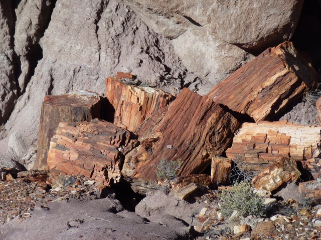 Petrified forest fossils trees, nature landscapes.